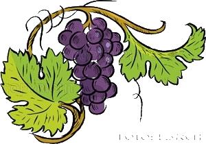 Tube feuille raisin - Feuille de vigne dessin ...
