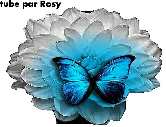 Tube fleur papillon