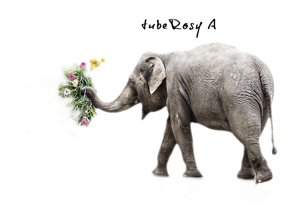 Elephant Sex Tube